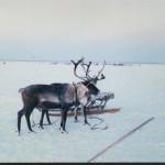 ПМОФ-1301 Фото. Оленья упряжка п. Аксарка 1995 г.
