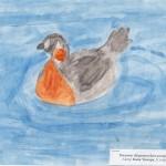 Краснозобая казарка. Автор Кали Тамара, 3г класс